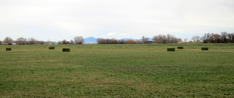 GREAT FALLS IRRIGATED FARM, GREAT FALLS, MONTANA